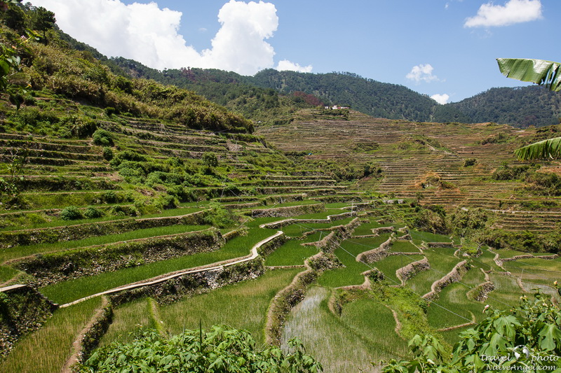 терассы,rice terraces,maligkong,philippines