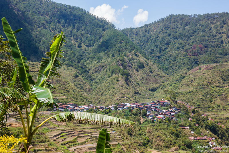 банан, поселок,rice terraces,maligkong,philippines