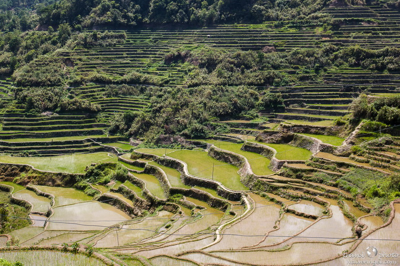 лужи,rice terraces,maligkong,philippines