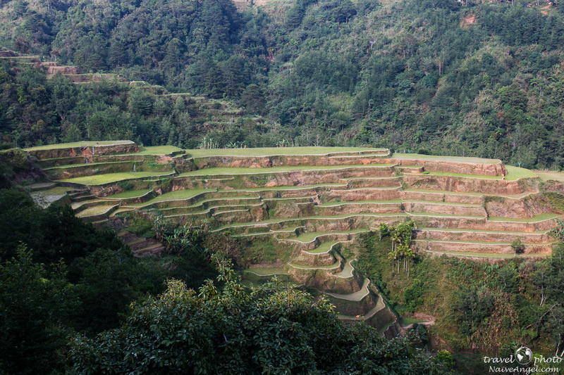 холмы в терассах,banaue,rice terraces,philippines