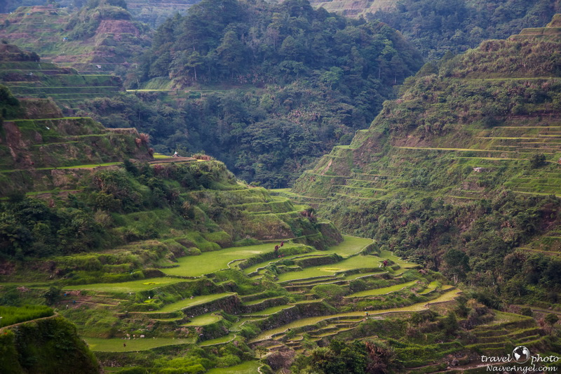 красивые терассы,banaue,rice terraces,philippines