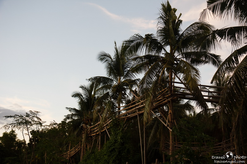 sky walk,coconut farm,bohol,philippines