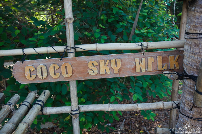 coco sky walk,coconut farm,bohol,philippines