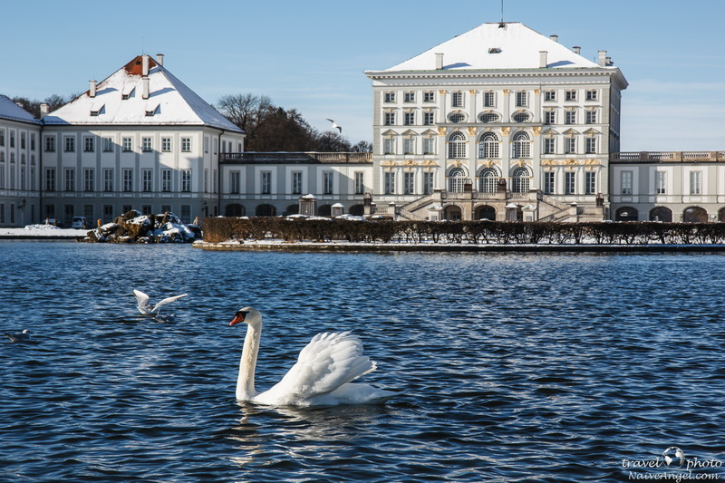 лебеди,дворец,Nymphenburg,germany,munich
