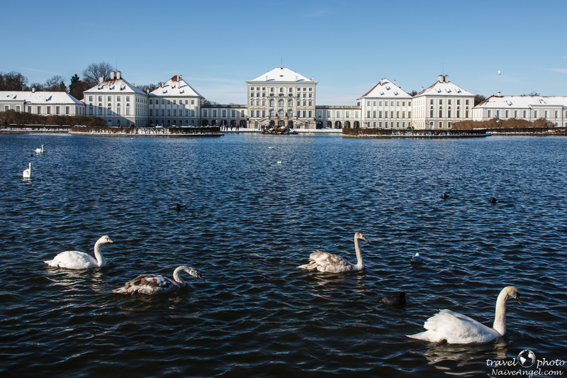 лебеди в ставке,дворец,Nymphenburg,germany,munich