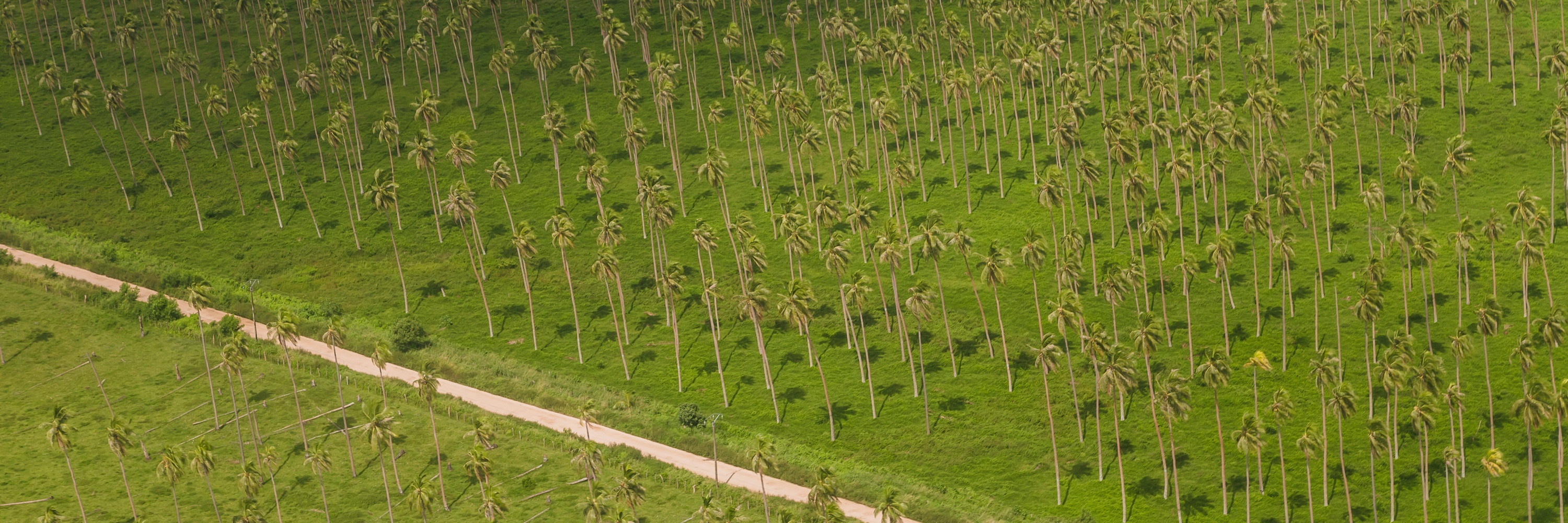 trees, from the air,palms, Espiritu Santo, Vanuatu