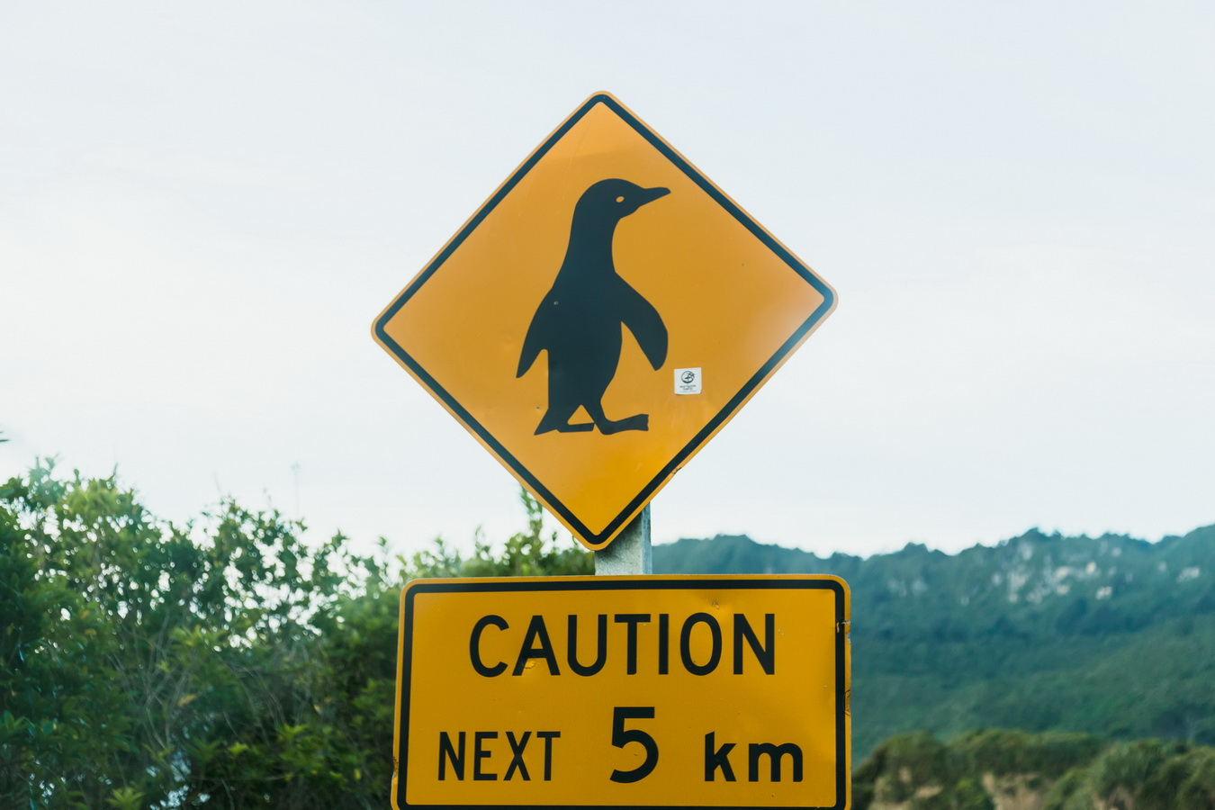 road sign, 5km, penguin crossing,penguin, road, car,road sign, new Zealand