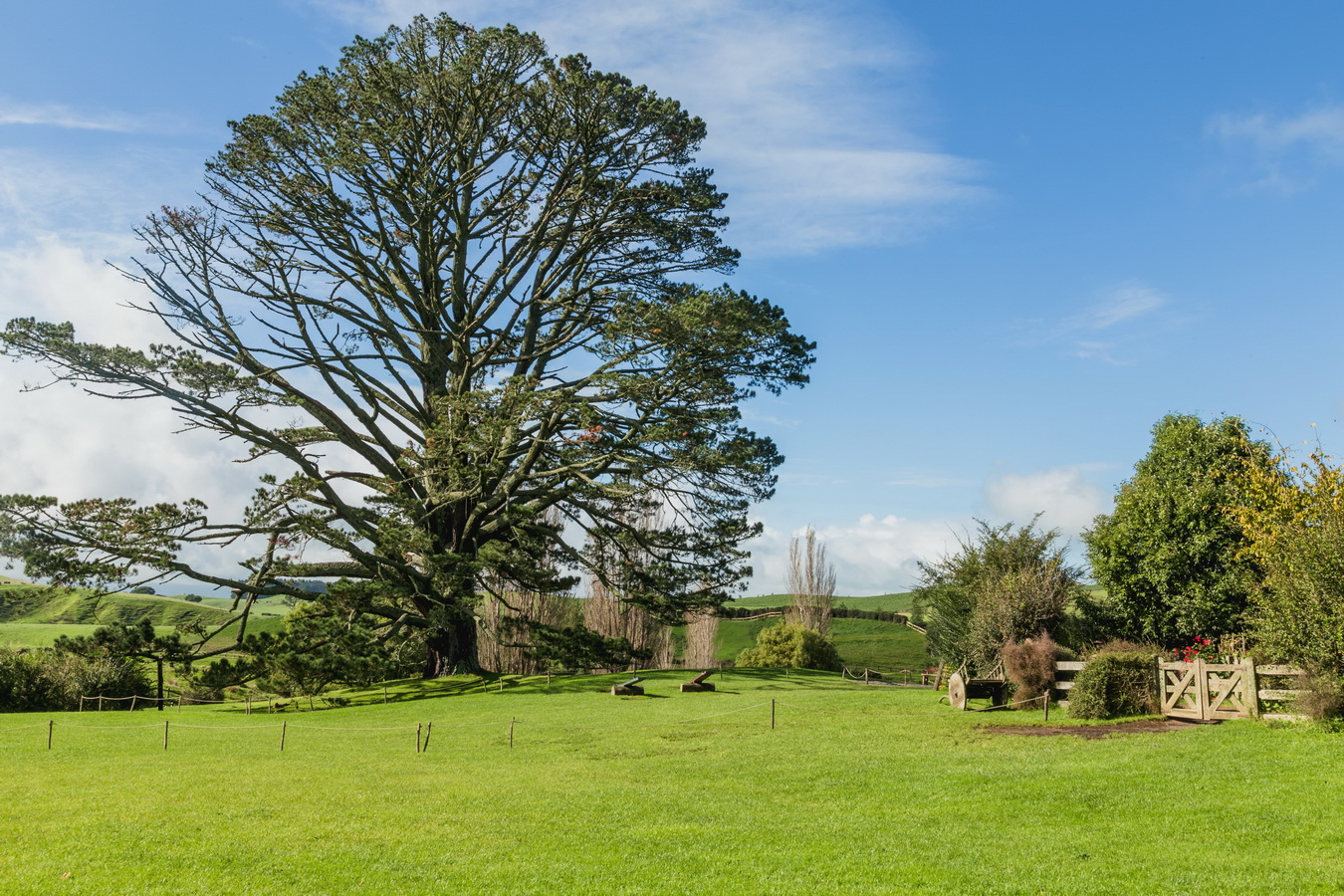 big tree,The Hobbiton, The Shire,Хоббитшир, Удел, Хоббитания, Заселье, Край,Matamata, North Island ,New Zealand