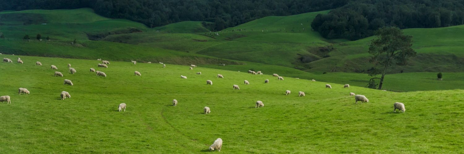 hills,sheep,The Hobbiton, The Shire,Хоббитшир, Удел, Хоббитания, Заселье, Край,Matamata, North Island ,New Zealand