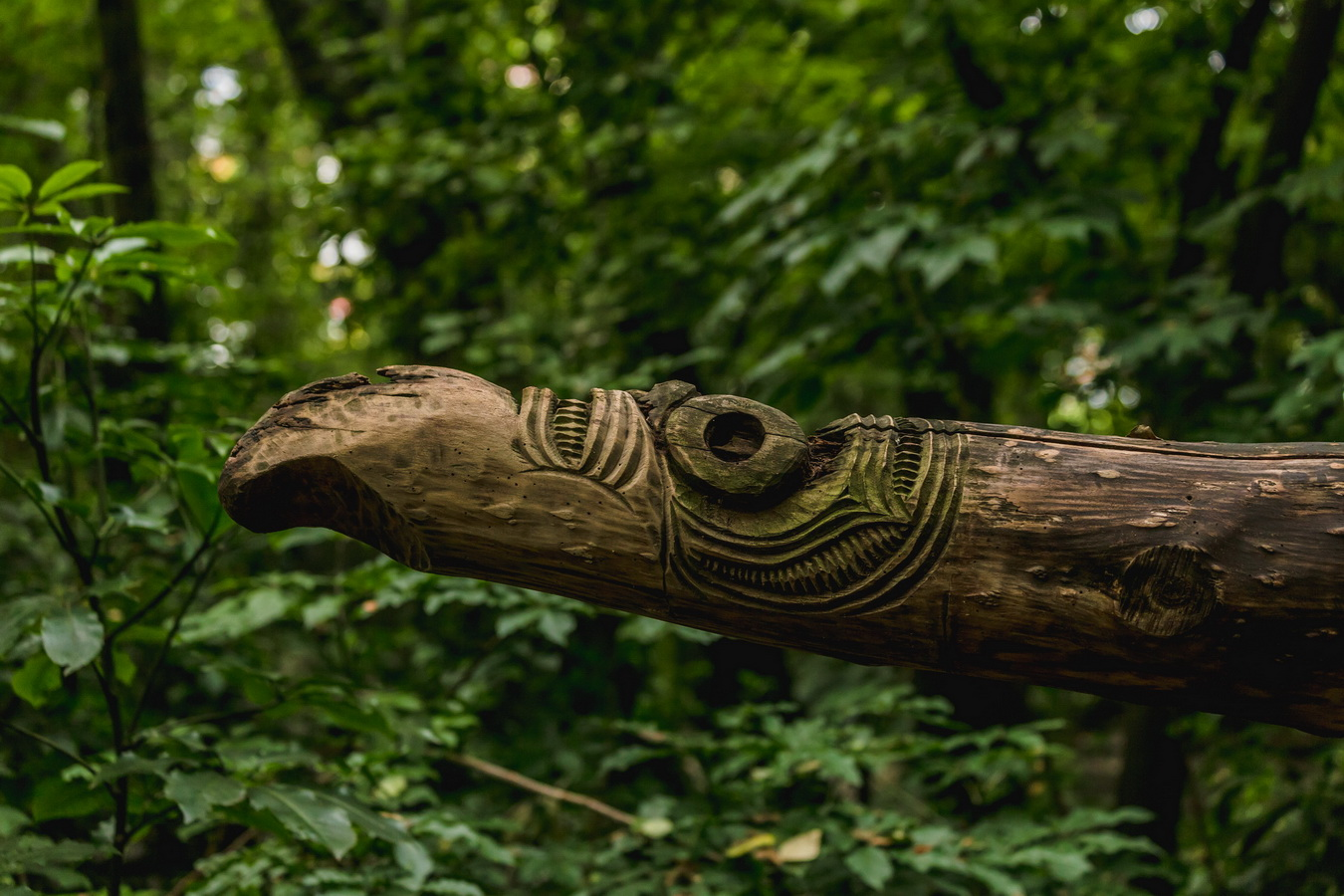 wood craft,Kiwi Birdlife Park,Queenstown,South Island ,New Zealand