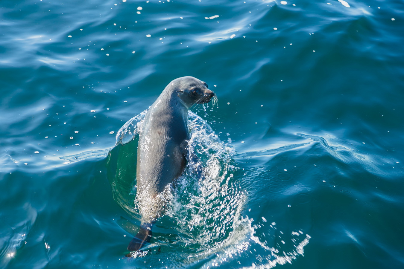 seal, Kaikoura,Whale Watch Tour, South Island ,New Zealand