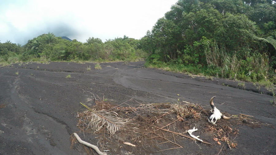 bones,skull, dead,north camp,lava fields,crater,volcano,Ambrym, Vanuatu